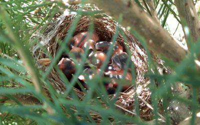 Nasi skrzydlaci bracia. Tyle życia tej wiosny… :)